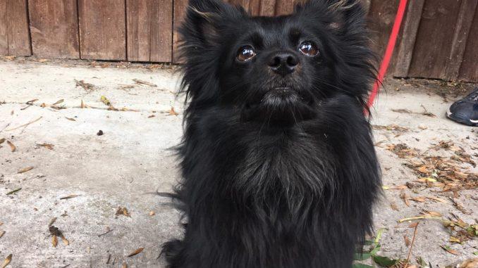 Hund Akio