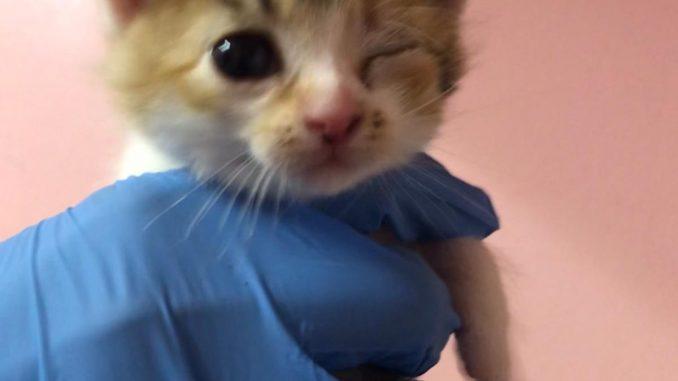 Wir bitten um Spenden - Kittenalarm