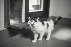 Katzen benötigen jährlich zwei Wurmkuren im Wert von ca. 50€.