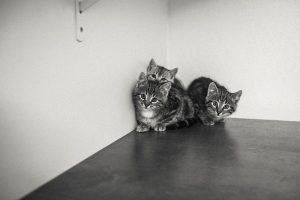 Kosten für die Grundimmunisierung einer Freigänger-Katze belaufen sich auf ca. 150€