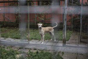 Durchschnittlich kostet die Unterbringung eines Hundes 200€ im Monat.