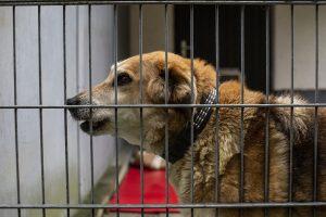 Die 8-fache Kombi-Impfung für Hunde kostet ca. 50€.