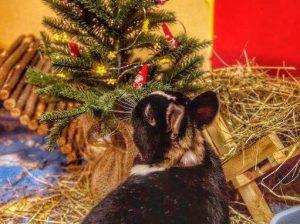 Unsere kleinsten Bewohner feiern auch Weihnachten