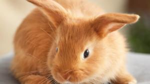 ❤️ Spenden Wunschliste für die Kleinsten im Tierheim ❤️
