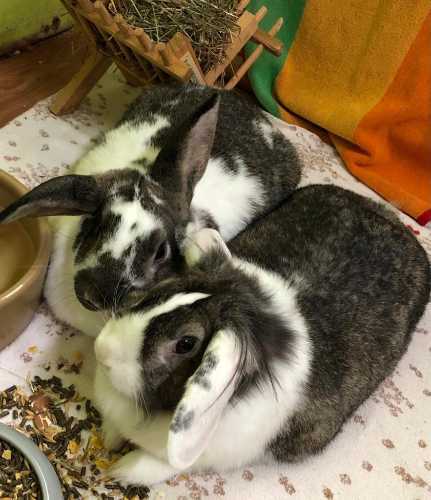 Kaninchenpärchen Nani und Daddy