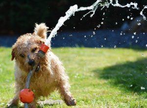 Sommerhitze und Hunde 🐶☀️🌡️