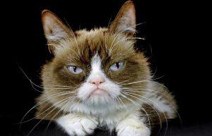 Können Katzen im Dunkeln sehen? Miezen-Fakten zum Weltkatzentag