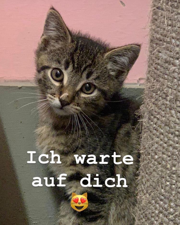 Kitten, Kitten, Kitten