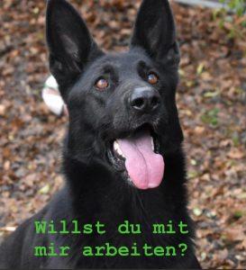 Hundetrainer/in gesucht!