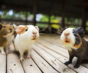 Unsere Kleintiere benötigen durchschnittlich 30€ monatlich, um sie artgerecht zu verpflegen.